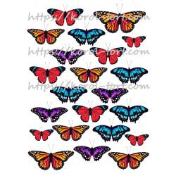 №95, Метелики (бабочки),...