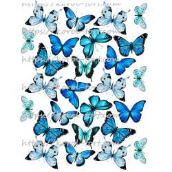 №97, Метелики (бабочки),...