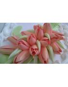 Тюльпани та малазійські
